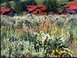 Summer wildflowers behind the cabins