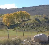 Fall view of neighboring ranch and gold aspens.